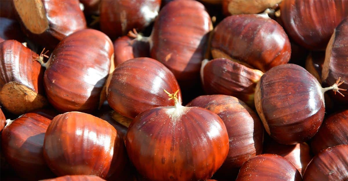 chestnuts-spain